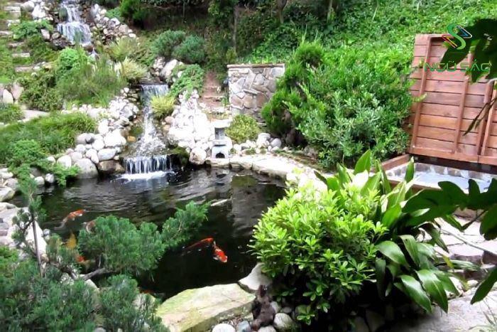 Mẫu hồ cá koi sân vườn