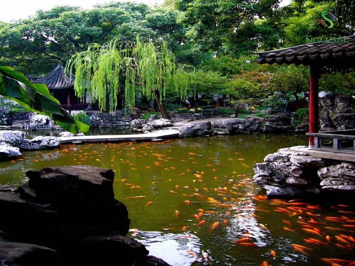 Thiết kế hồ cá Koi sân vườn