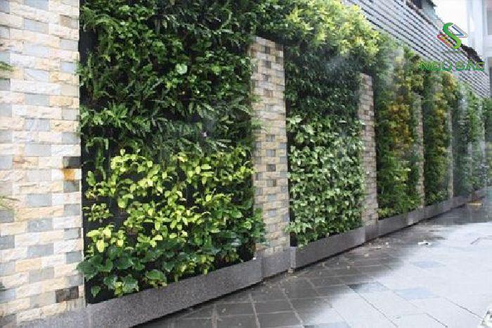 Mẫu tường cây xanh cho sân vườn nhà phố