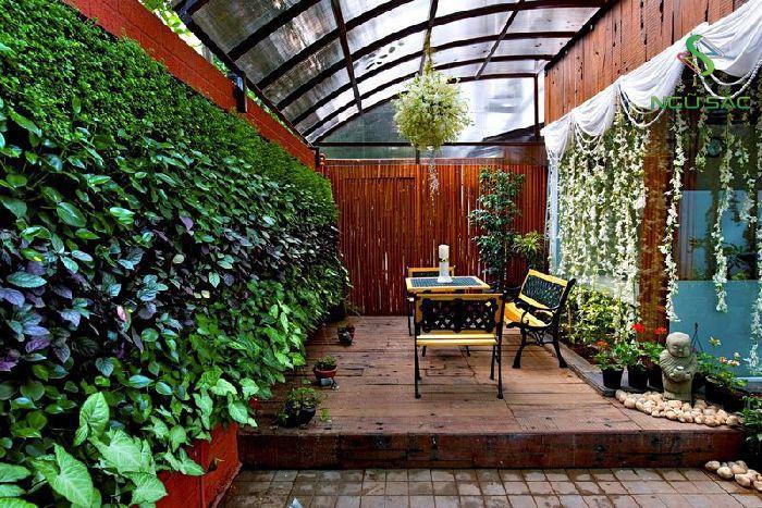 Thiết kế tường cây xanh cho nhà phố