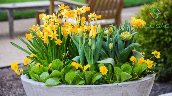 Loài hoa biểu tượng yếu tố ngũ hành