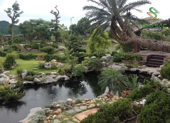 Mẫu sân vườn với hồ cá Koi