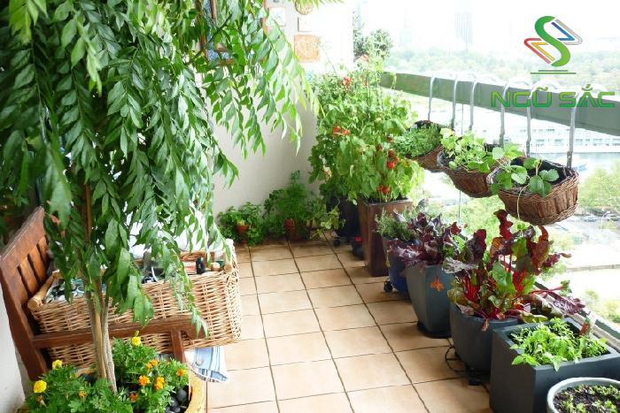 Tận dụng ban công trồng rau
