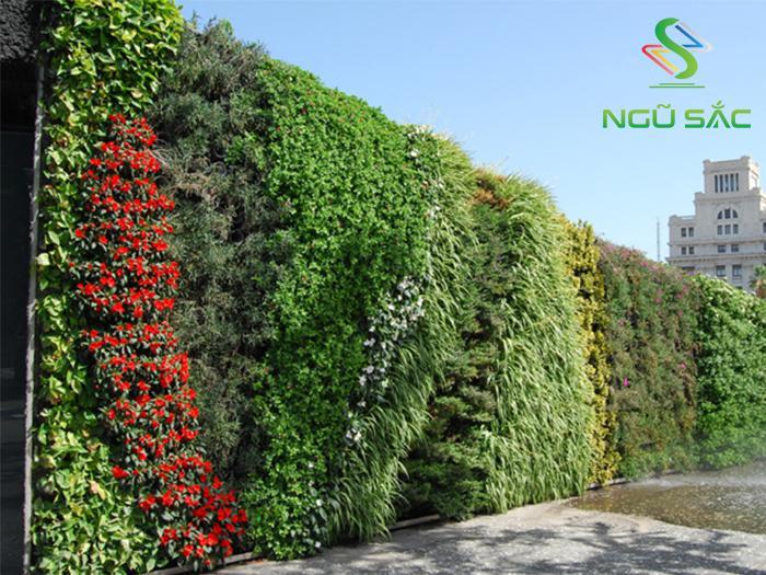 Các loại cây trồng tường đứng