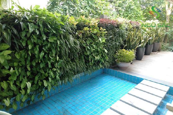 Tường cây xanh ở lối đi vườn
