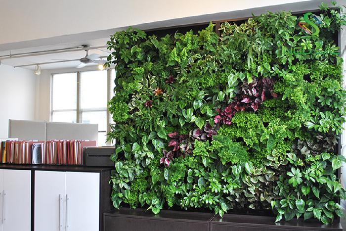 Thiết kế tường cây xanh ở văn phòng
