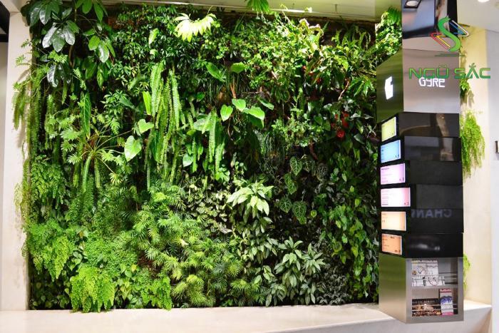 Lợi ích của tường cây xanh