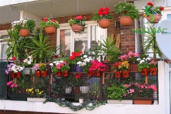 Ban công rực rỗ với các loại hoa ngày Tết