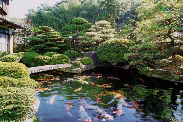 Hồ cá Koi kết hợp với cầu