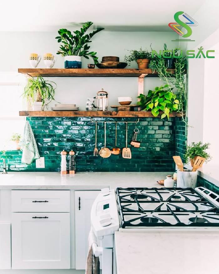 Một số cây cảnh cho nhà bếp đẹp