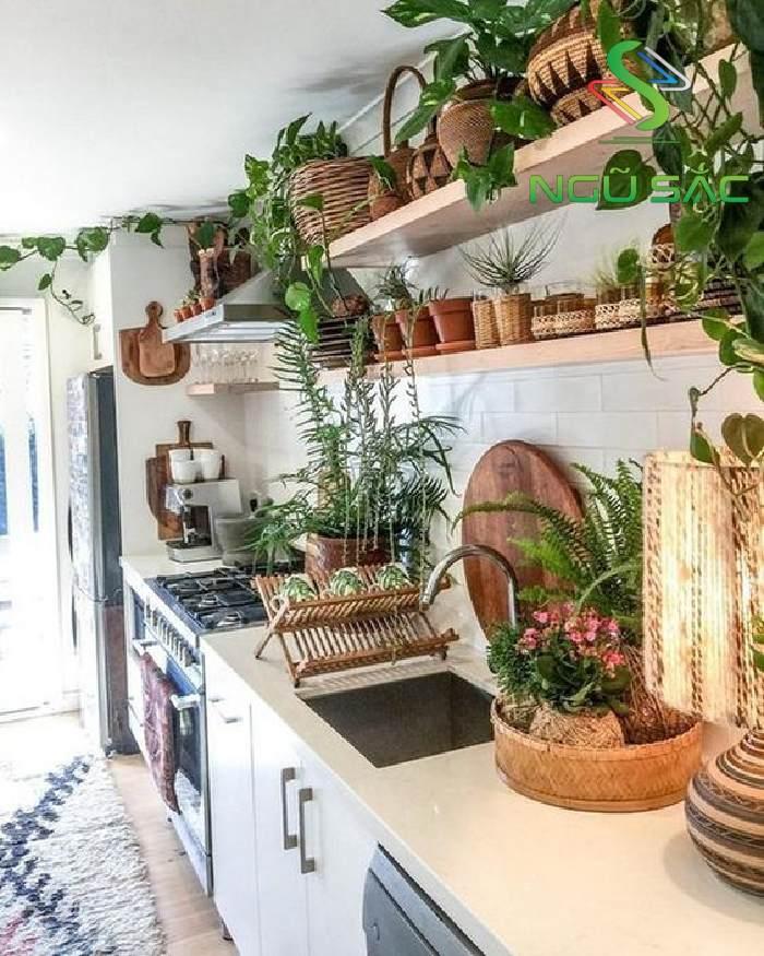 Trang trí gian bếp với các chậu cây cảnh