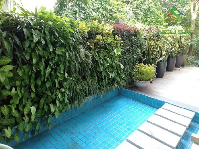 Tiểu cảnh tường cây xanh