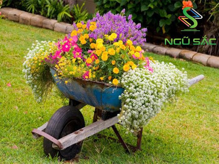 Trồng hoa trong xe rùa cũ