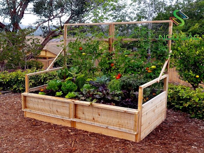 Bồn trồng rau với dàn leo