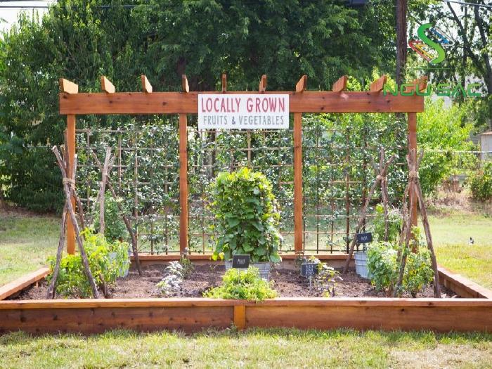 Khu vực trồng rau đầy sáng tạo