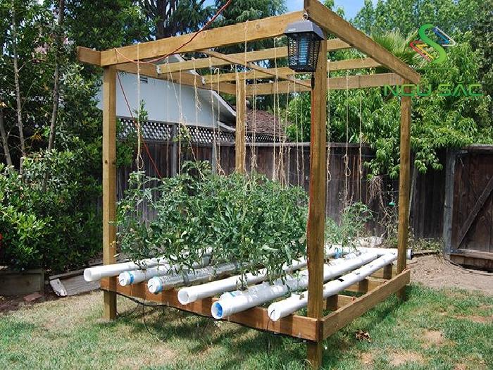 Hệ thống trồng rau thủy canh tự tạo