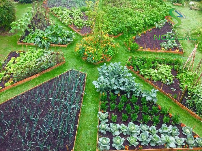 Cách thiết kế vườn rau tại nhà