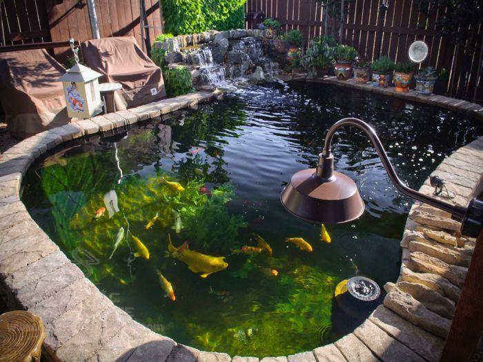 Tiểu cảnh thác nước, hồ cá Koi