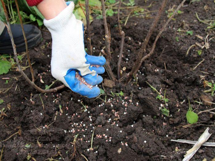 Định kì bón phân cho cây trồng