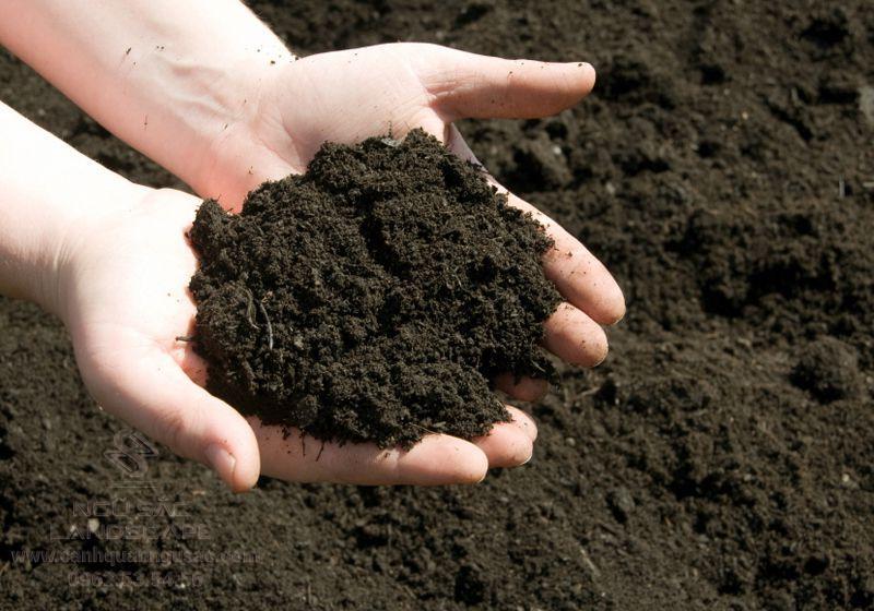 Cung cấp đất sạch trồng cây