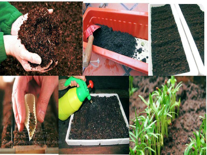 Đất dinh dưỡng cho cây trồng
