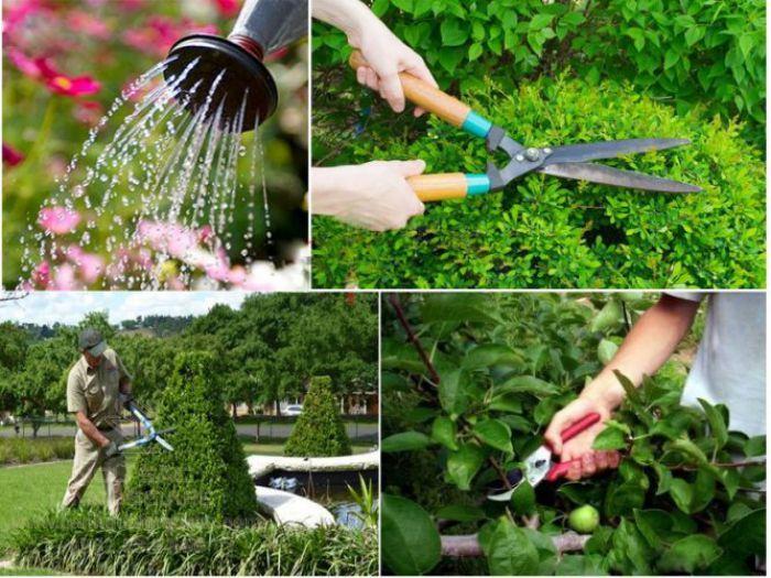 Việc cần làm khi bảo trì cảnh quan sân vườn