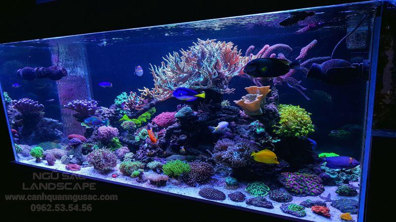 Kích thước bể cá biển chuẩn