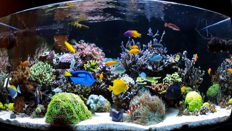 Trang trí bể cá nước mặn sinh động