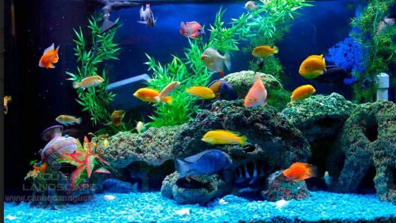 Hệ thống ánh sáng màu cho bể cá thêm sinh động