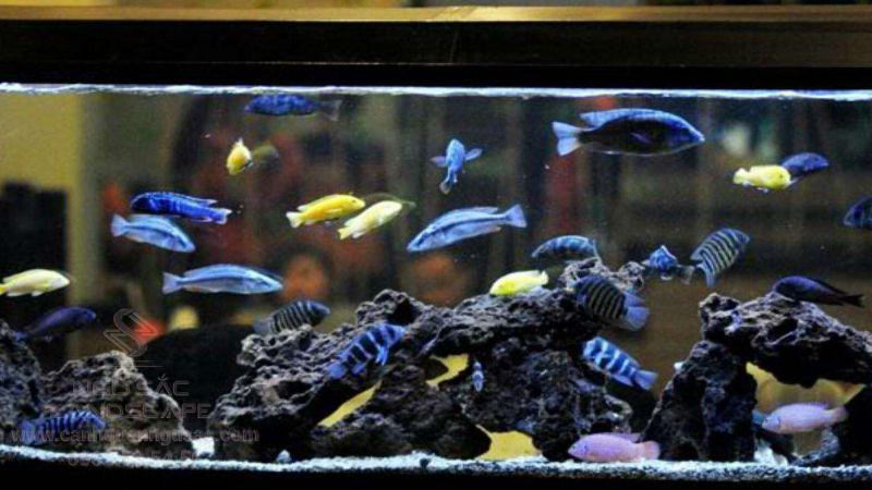 Lắp đặt bể cá biển giá rẻ