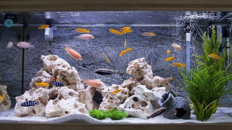 Cân bằng nồng độ nước nuôi cá biển đúng tiêu chuẩn
