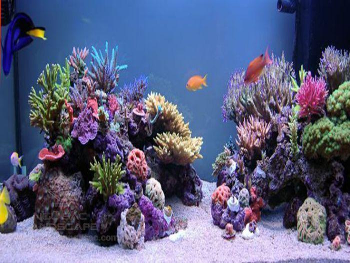 Hồ san hô trang trí