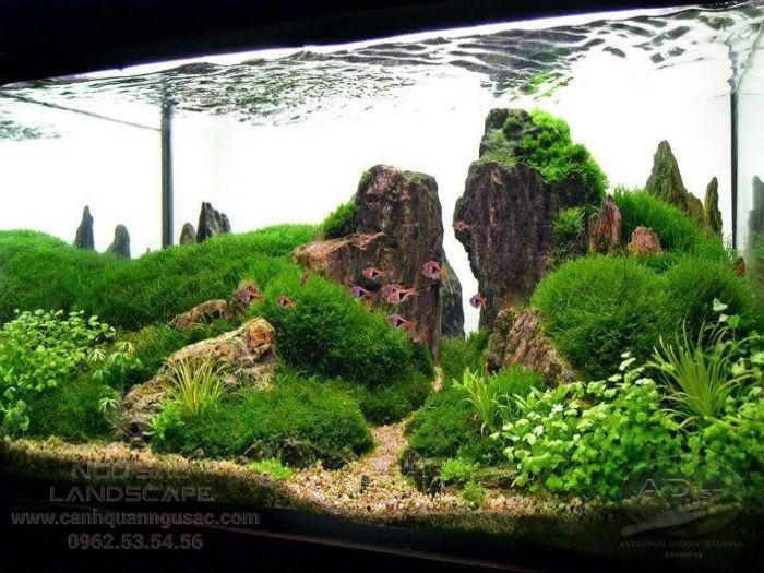 Mẫu hồ cá cảnh trang trí núi đá rêu