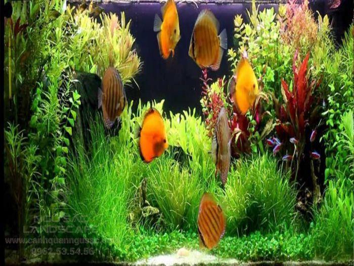 Bể cá cảnh với cây thủy sinh