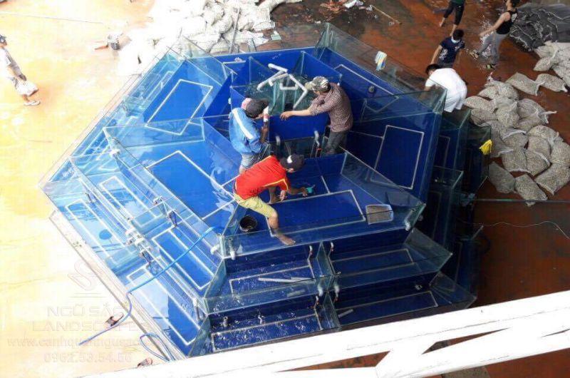 Lắp đặt bể hải sản