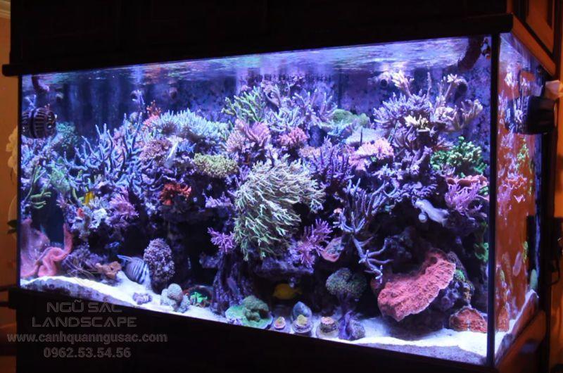 Tiêu chuẩn hồ nuôi san hô