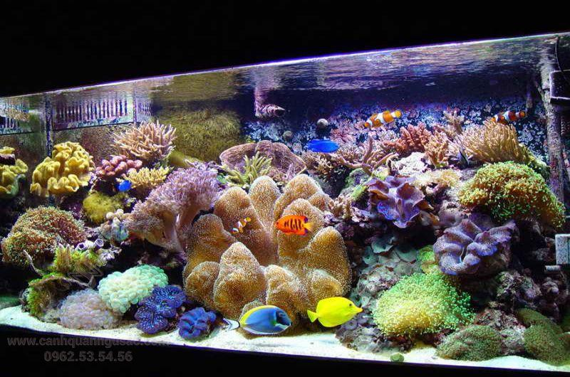 Điều kiện hồ cảnh cho san hô