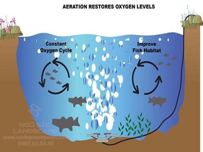 Hệ thống sục khí, bơm oxy trong hồ