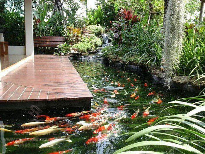 Yêu cầu về chất lượng nước hồ cá Koi