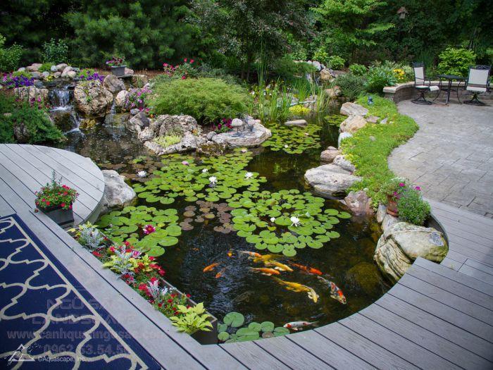 Hồ cá Koi đẹp sân vườn