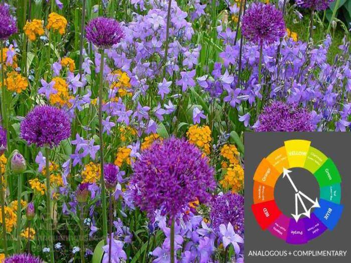 Các nguyên tắc về bánh xe màu sắc trong thiết kế sân vườn