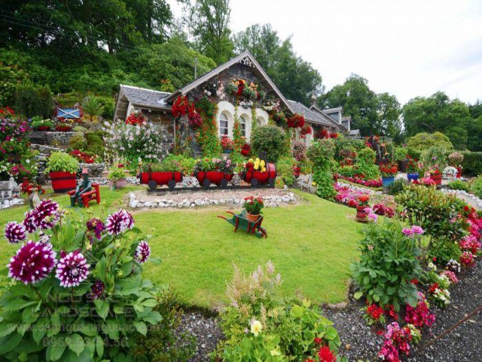 Các loài hoa dễ trồng trong sân vườn