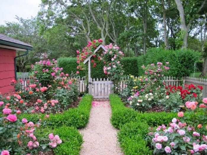 Vườn hoa hồng với dàn leo đẹp mắt