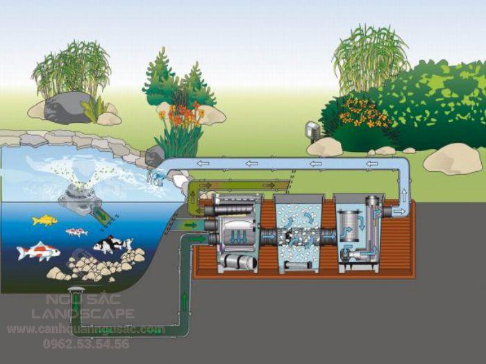 Hệ thống lọc hồ cá Koi hiện đại