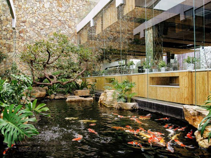 Mẫu hồ cá Koi dành cho quán cà phê