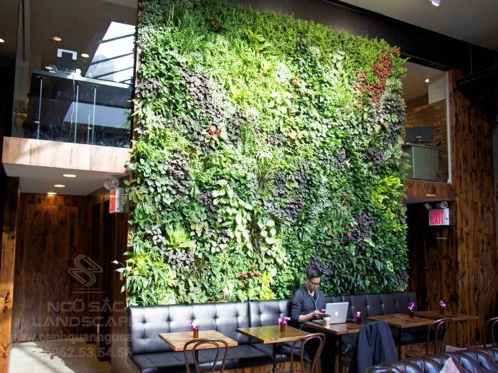 Mảng tường cây xanh mới lạ trong quán
