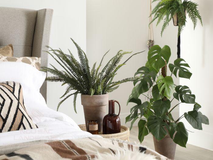 Cây dương xỉ được trang trí trong phòng ngủ