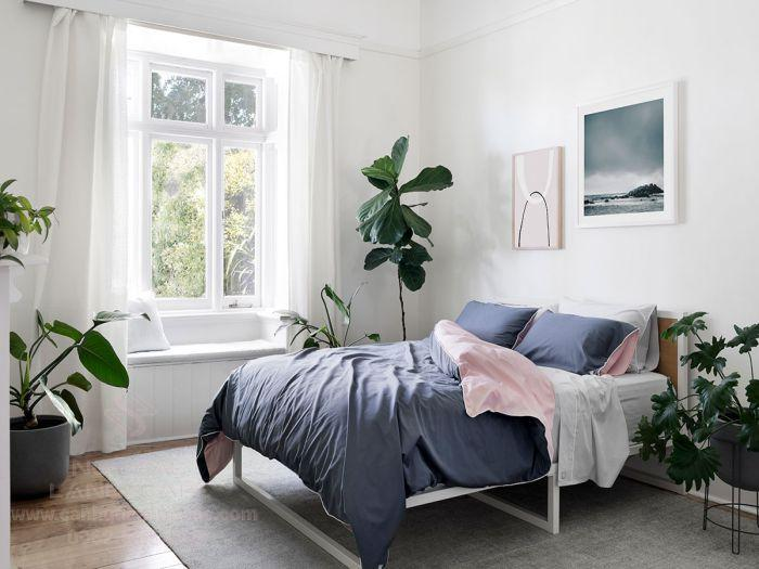 Top 13 Cây Trồng Trong Phòng Ngủ Giúp Bạn Có Giấc Ngủ Ngon Hơn