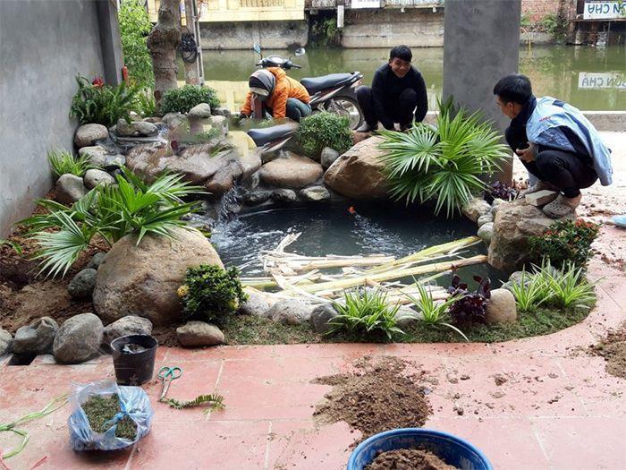 Đội ngũ thi công đang trồng cây cọ cảnh