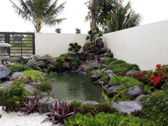 Cây dương xỉ dễ trồng và chăm sóc